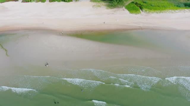vídeos de stock e filmes b-roll de aerial view; hua hin beach top view - documentário