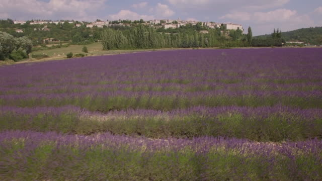 aerial view ws of huge lavender fields with small city of sault - provence alpes cote d'azur stock videos & royalty-free footage