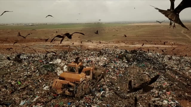 aerial view in slow motion - thousands of black kites (milvus migrans) foraging on a huge rubbish dump while heavy vehicles and garbage trucks bring more garbage/ duda'im rubbish dump, southern israel - rubbish dump stock videos & royalty-free footage