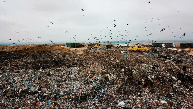 aerial view in slow motion- thousands of black kites (milvus migrans) foraging on a huge rubbish dump while heavy vehicles and garbage trucks bring more garbage/ duda'im rubbish dump, southern israel - garbage truck stock videos & royalty-free footage