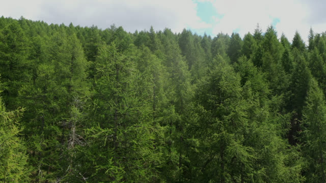 aerial view in the larch forest in the mountains - named wilderness area stock videos & royalty-free footage