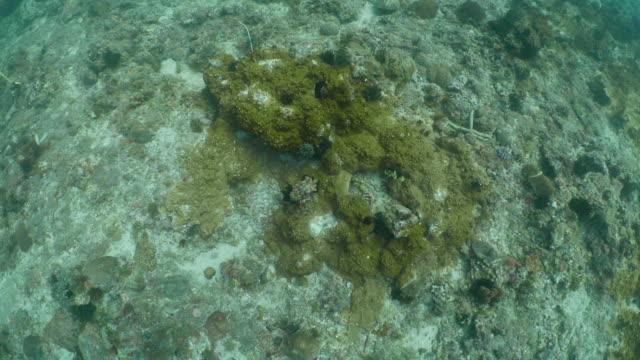 aerial view in undersea coral reef - mar stock videos & royalty-free footage