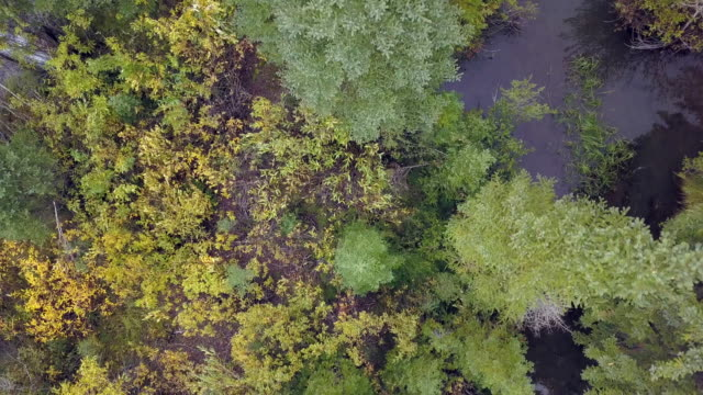 aerial view looking down at small pond in forest - fallen tree stock videos and b-roll footage