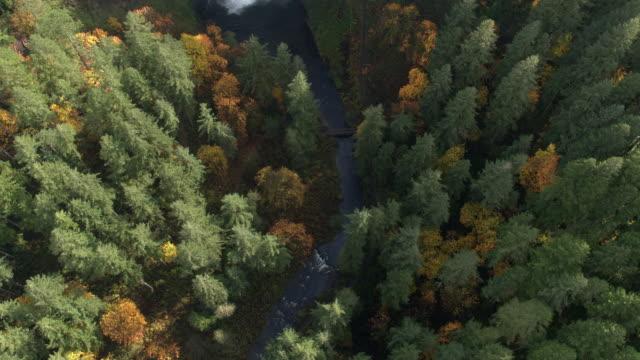 stockvideo's en b-roll-footage met aerial view looking down toward river going up stream to waterfall - oregon amerikaanse staat