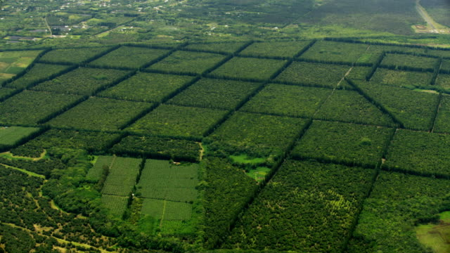 aerial view macadamia nut trees farming crop hawaii - land stock videos & royalty-free footage