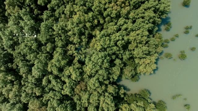 Aerial View: Mangrove forest in Chonburi province, Thailand.