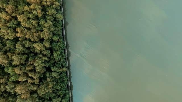 Luftaufnahme: Mangrovenwald