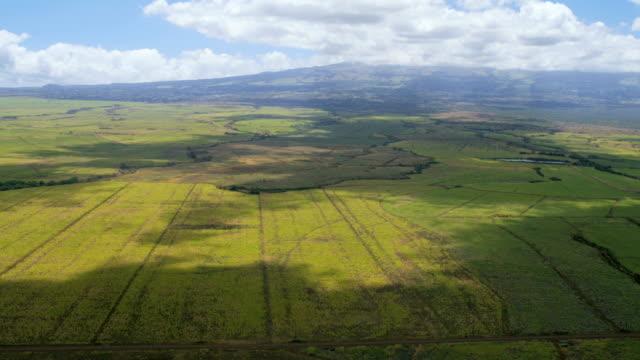 aerial view maui sugar cane crop farming hawaii - hawaii inselgruppe stock-videos und b-roll-filmmaterial