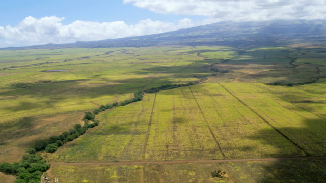 aerial view maui sugar cane crop farming hawaii - hawaii inselgruppe stock-videos und b-roll-filmmaterial