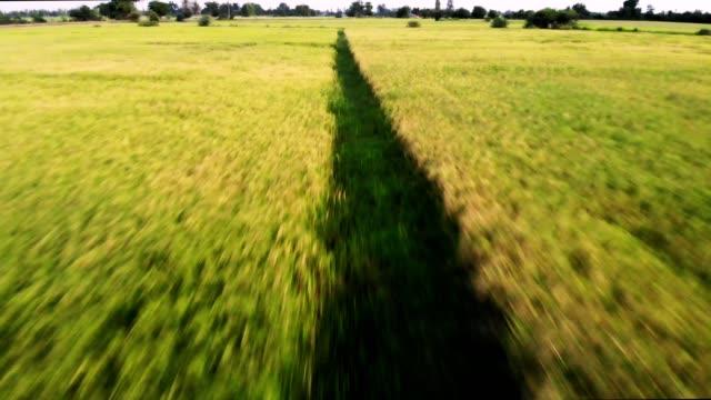 田舎の黄金の田んぼの空撮運動 - モミ点の映像素材/bロール