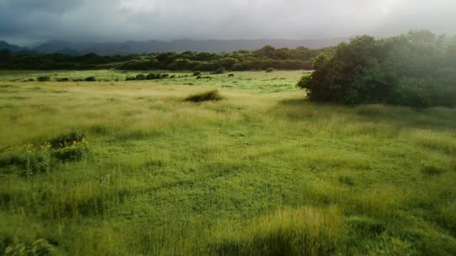 aerial view: moving quickly away from horses grazing in green grassy landscape - hill video stock e b–roll