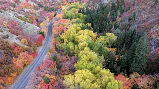 aerial view moving up canyon looking down at colorful trees - 20 seconds or greater stock videos & royalty-free footage