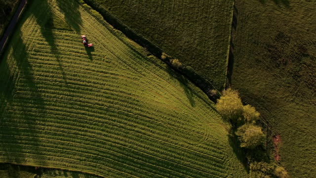 stockvideo's en b-roll-footage met aerial view mown fields & tractor mowing - field