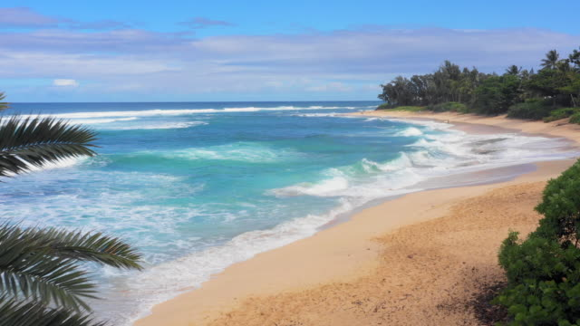 aerial view oahu beach & ocean with palm trees & man with bodyboard - hawaii islands stock videos & royalty-free footage