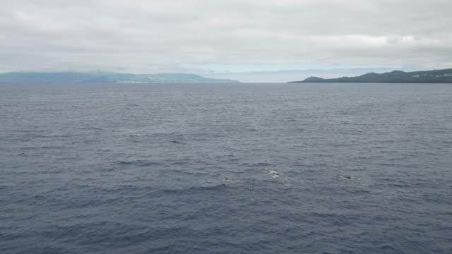 vídeos de stock e filmes b-roll de aerial view of 3 sperm whales swimming in the ocean - bando de mamíferos marinhos
