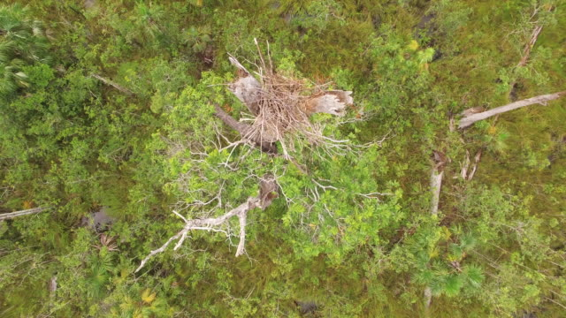 aerial view of a bird nest - animal nest stock videos and b-roll footage