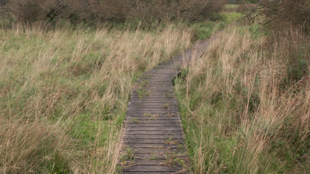 aerial view of a boardwalk in scottish countryside - reed grass family stock videos & royalty-free footage