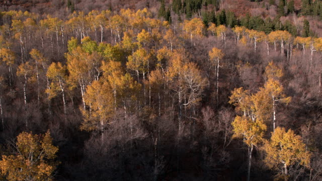 Aerial view of a colorful forest during the fall.
