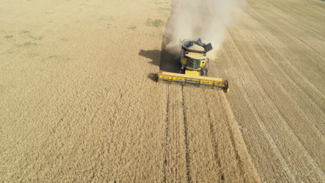 aerial view of a combine harvester harvesting cereal plant. bavaria, germany. europe. - combine harvester stock videos & royalty-free footage