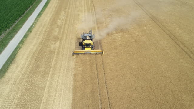 aerial view of a combine harvester harvesting cereal plant. bavaria, germany. europe. - cereal plant stock-videos und b-roll-filmmaterial