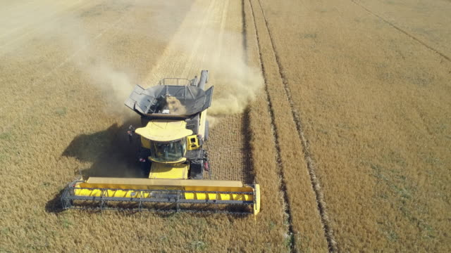 aerial view of a combine harvester harvesting cereal plant. bavaria, germany. europe. - landwirtschaft stock-videos und b-roll-filmmaterial