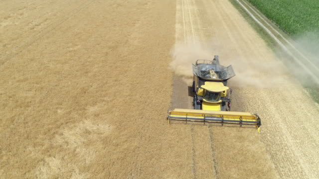 aerial view of a combine harvester harvesting cereal plant. bavaria, germany. europe. - orzo video stock e b–roll
