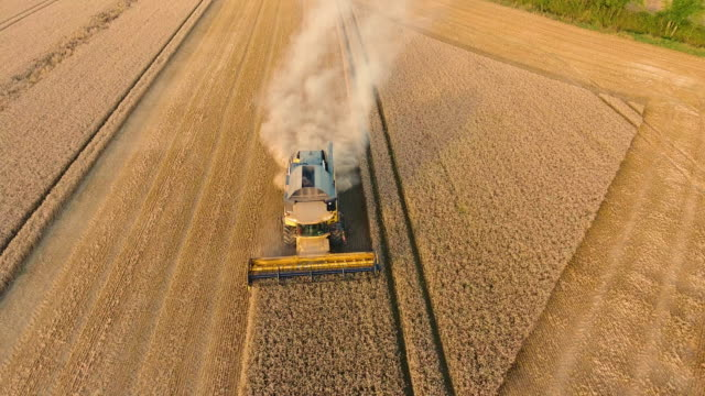 aerial view of a combine harvester harvesting crop - agriculture stock videos & royalty-free footage