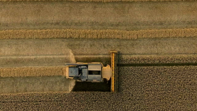 aerial view of a combine harvester harvesting crop - combine harvester stock videos & royalty-free footage