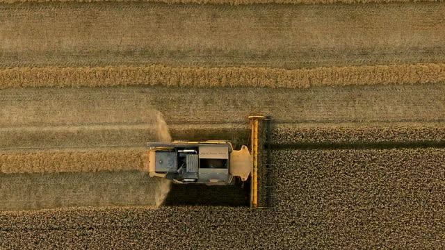 作物を収穫するコンバインの航空写真 - コンバイン点の映像素材/bロール