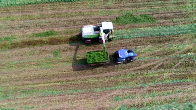 Aerial View of a Combine Harvester Harvesting the Agricultiral Fierld at Sunset. Summertime. Agricultural Equipment in Cultivated Land