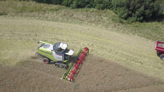 stockvideo's en b-roll-footage met aerial view of a combine harvesters harvesting a rape field in midsummer in germany while a tractor with a trailer is driving the harvest away due to... - zomerzonnewende