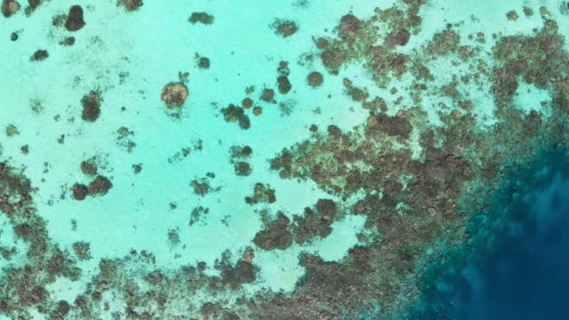 Aerial View of a Coral Reef in the Maldives