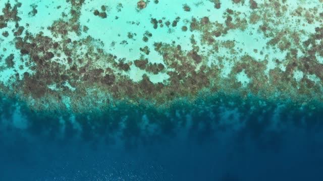 vídeos de stock, filmes e b-roll de vista aérea de um recife de coral nas maldivas - recife fenômeno natural