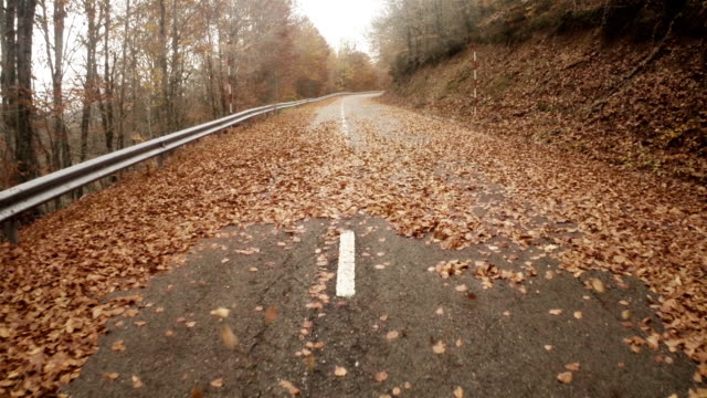 aerial view of a empty road in autumn with leafs - empty road stock videos & royalty-free footage