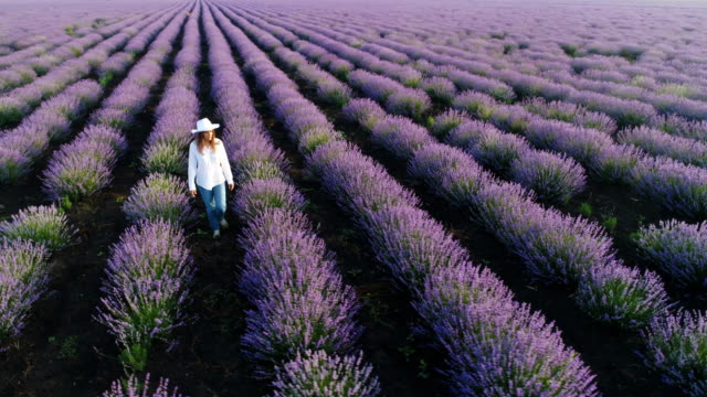 aerial view of a farmer woman walking through her lavender field. - lavender stock videos & royalty-free footage
