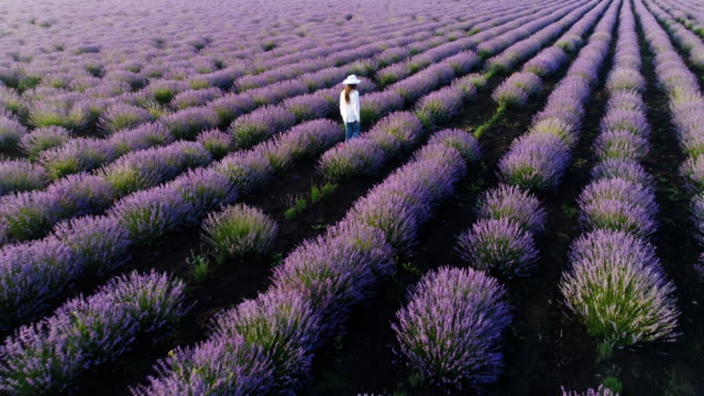 aerial view of a farmer woman walking through her lavender field. - scented stock videos & royalty-free footage