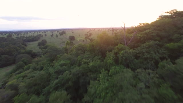 aerial view of a farmland at sunset - cerrado stock videos & royalty-free footage