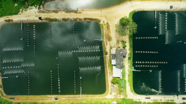 aerial view of a fishery and prawn farm - shrimp stock videos & royalty-free footage