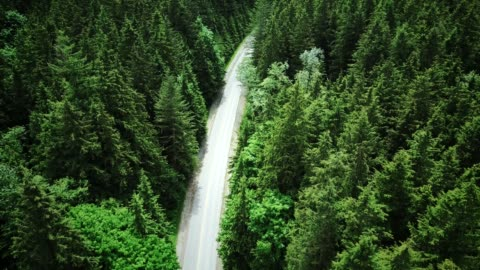 4k heli : aerial view of a forest in british columbia - aerial view stock videos & royalty-free footage