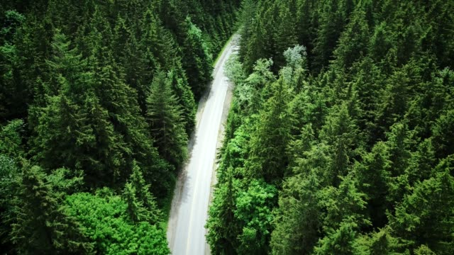 4K HELI : aerial view of a forest in british columbia
