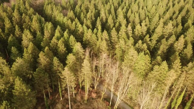 aerial view of a forest in roscommon, ireland. - timber stock videos & royalty-free footage