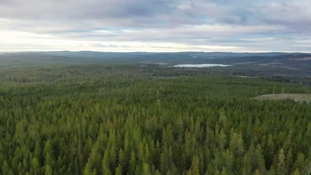 vidéos et rushes de vue aérienne d'un paysage de forêt - suède