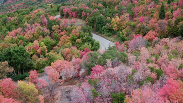 aerial view of a forest of colorful fall trees and a road - プロボ点の映像素材/bロール