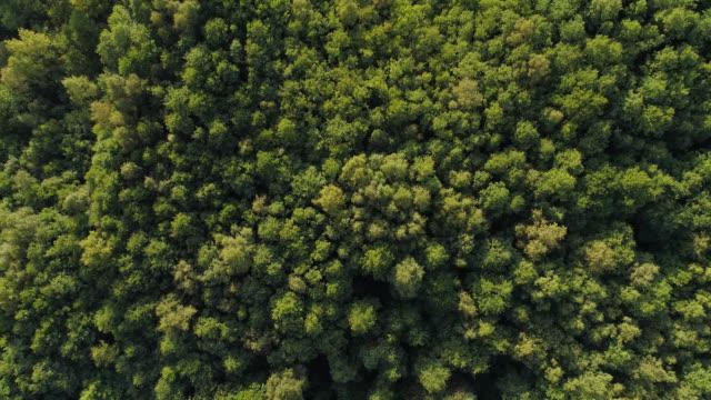 flygfoto över en skog - remus kotsell bildbanksvideor och videomaterial från bakom kulisserna