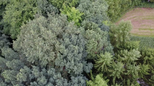 aerial view of a forest - air to air shot stock videos and b-roll footage