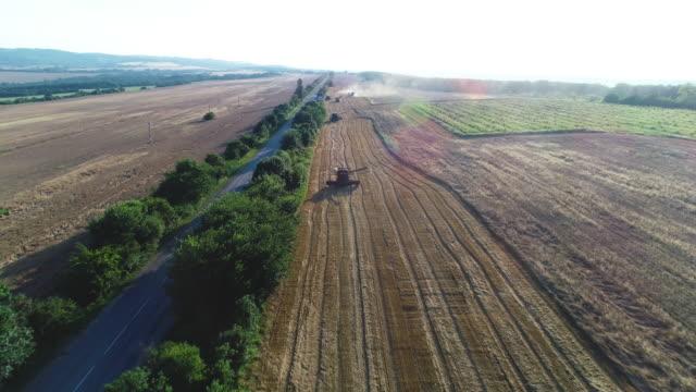 vidéos et rushes de vue aérienne d'un groupe de moissonneurs de moissonneuse-batteuse récoltant le champ agricole au coucher du soleil. été. équipement agricole en terre cultivée - cereal plant