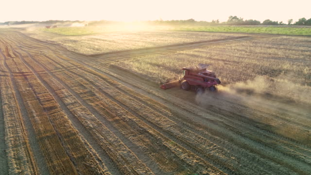 aerial view of a group of combine harvesters harvesting the agricultural field at sunset. summertime. agricultural equipment in cultivated land - tractor stock videos & royalty-free footage