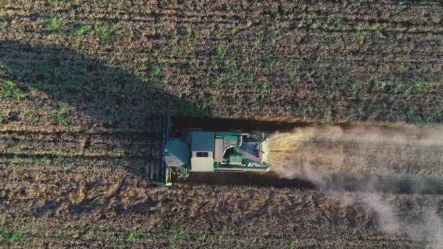 aerial view of a group of combine harvesters harvesting the agricultural field at sunset. summertime. agricultural equipment in cultivated land - harvest festival stock videos & royalty-free footage