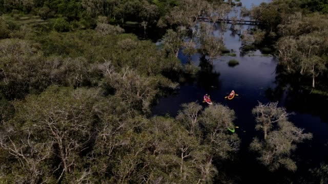 aerial view of a kayak cruising through a river and tropical forest .green scenery . - kayak stock videos & royalty-free footage