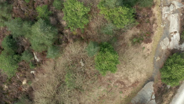 aerial view of a large outcrop of granite in an area of scottish forest in dumfries and galloway - heather stock videos & royalty-free footage